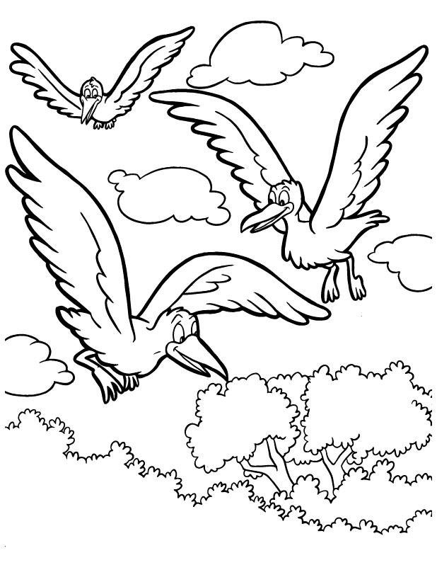 malebog fugle