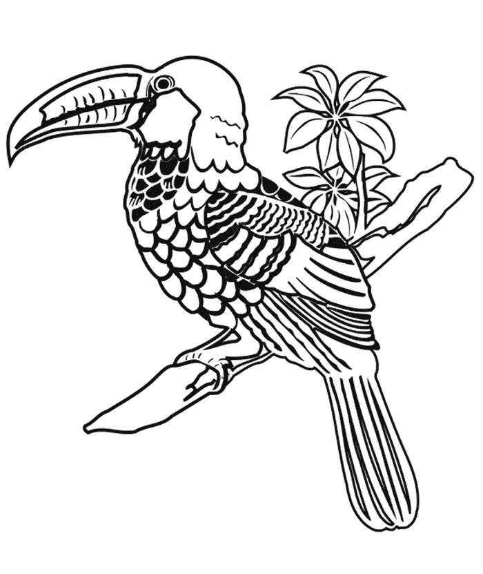 Tukan Malebog Malebog Fugle