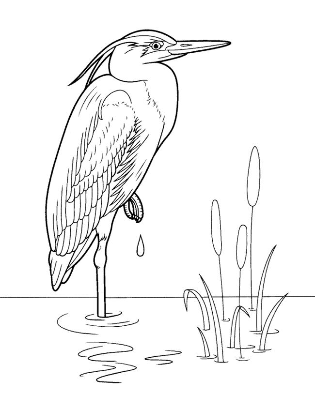 Fiskehejre Malebog Malebog Fugle