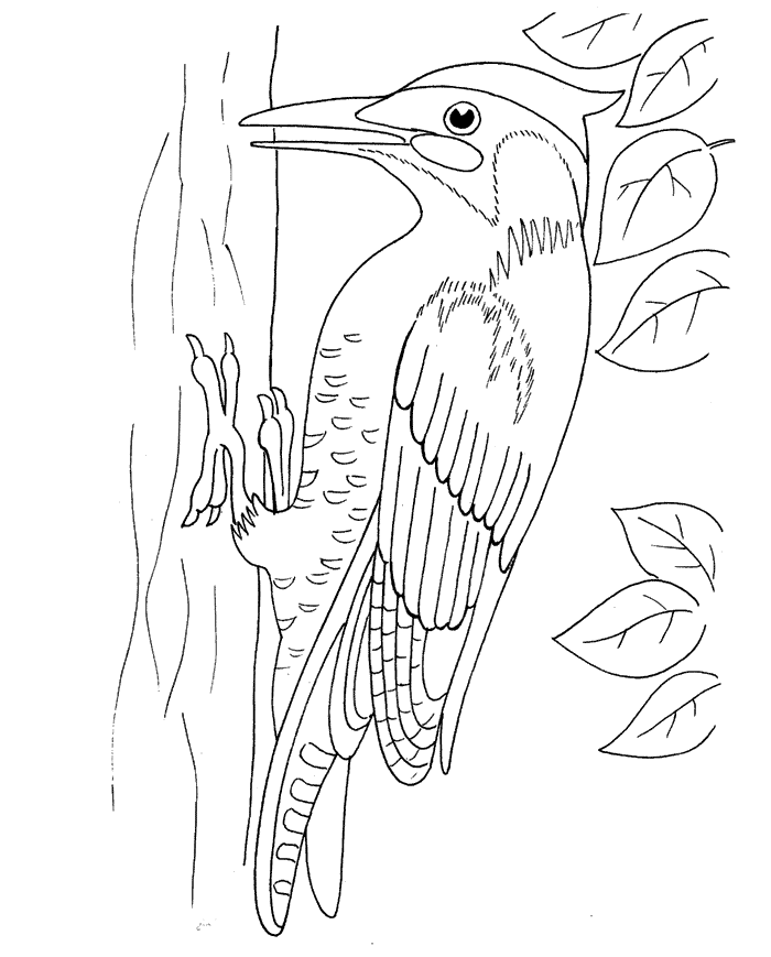 Flagspætte Malebog Malebog Fugle