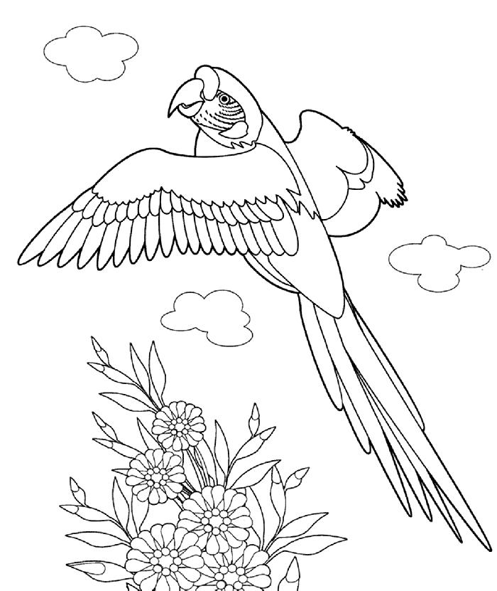 Papegøje Malebog Malebog Fugle