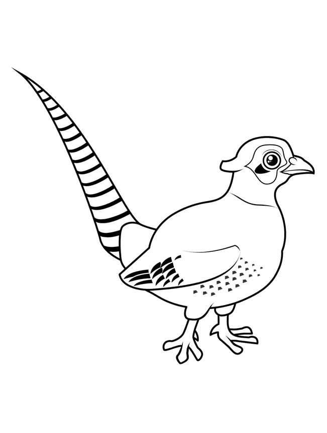 Fasan Malebog Malebog Fugle