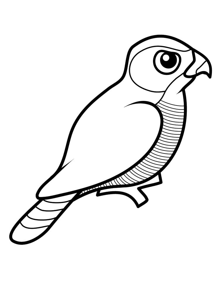 Accipiter Malebog Malebog Fugle