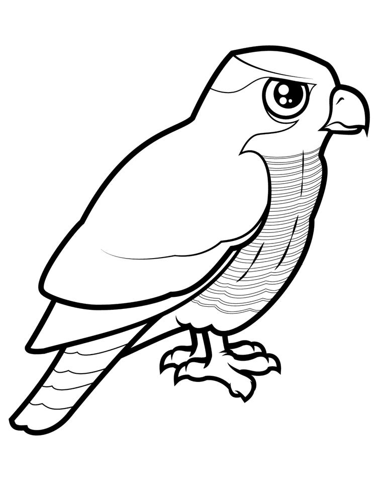 Duehøg Malebog Malebog Fugle
