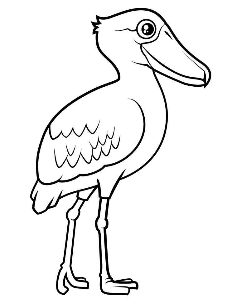 Træskonæb Malebog Malebog Fugle