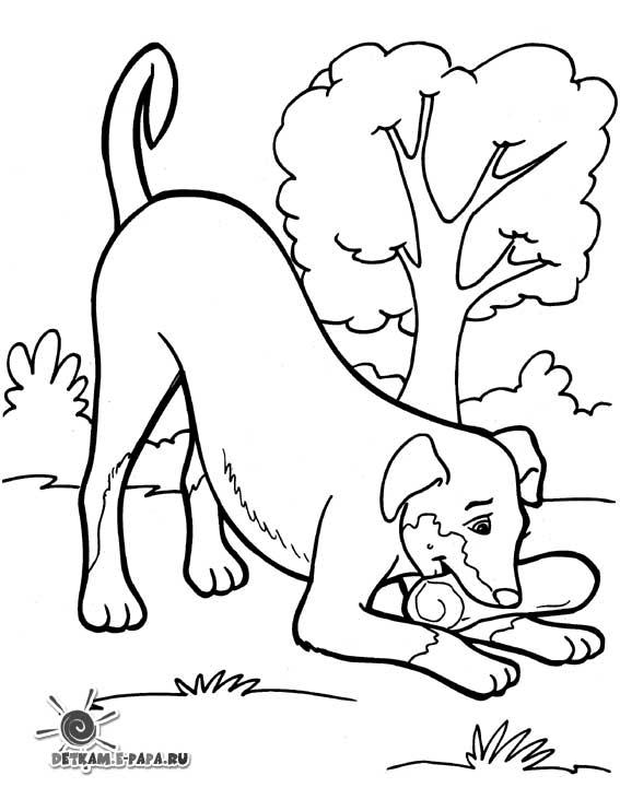 tegning af hundehvalp