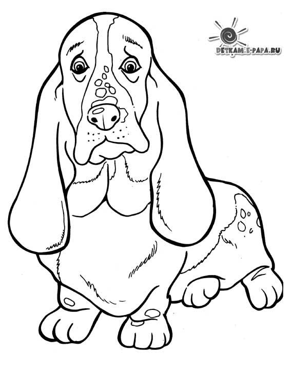 tegning af hundehvalpe